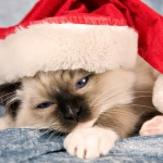 cats_animals_christmas_hat_desktop_1920x1080_hd-wallpaper-1686216