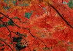 Autumn photos_10