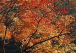 Autumn photos_11