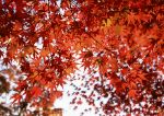 Autumn photos_15