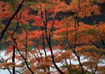 Autumn photos_7
