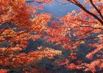 Autumn photos_8